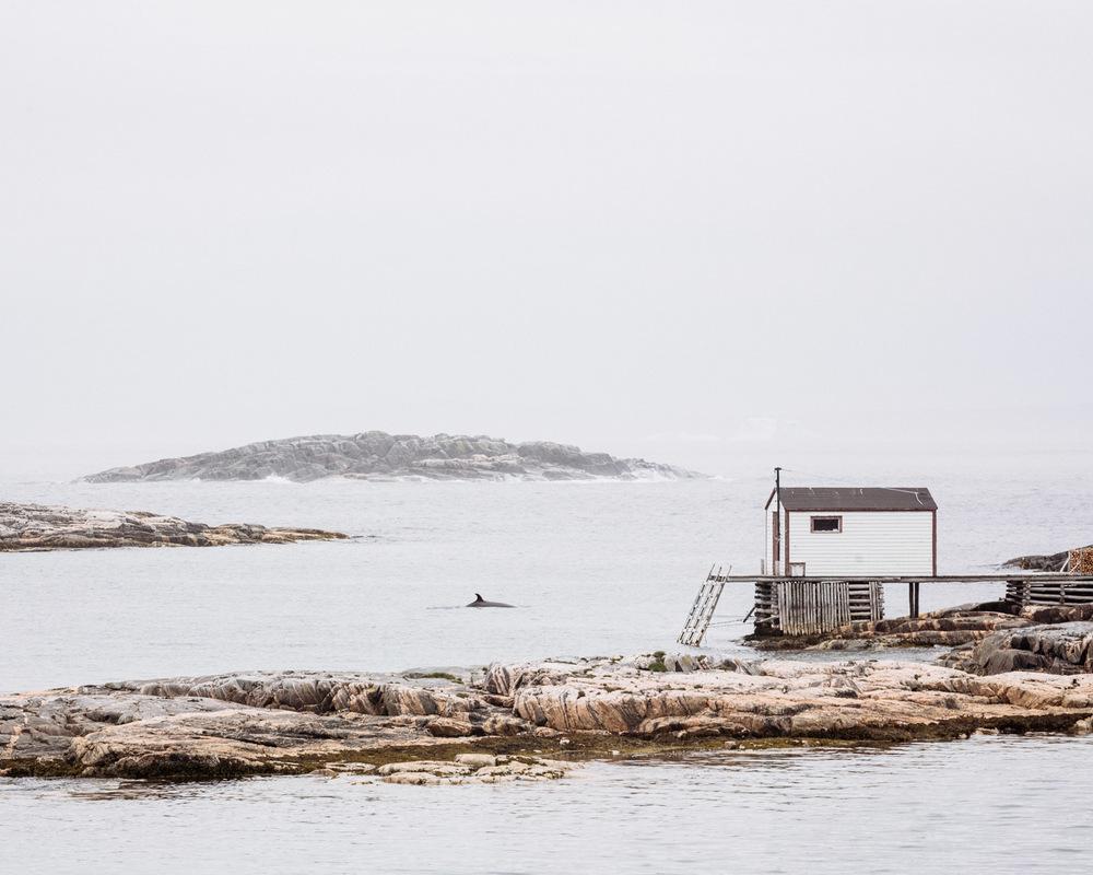 Newfoundland-13.jpg