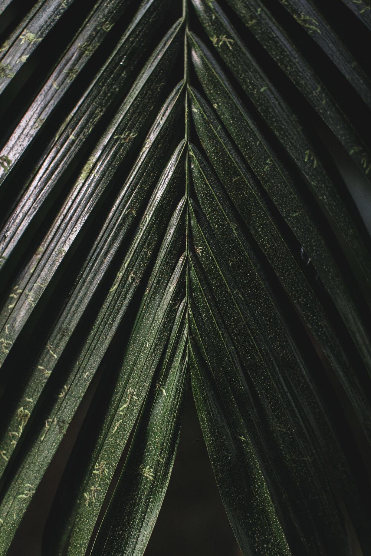 Hawaii-32.jpg
