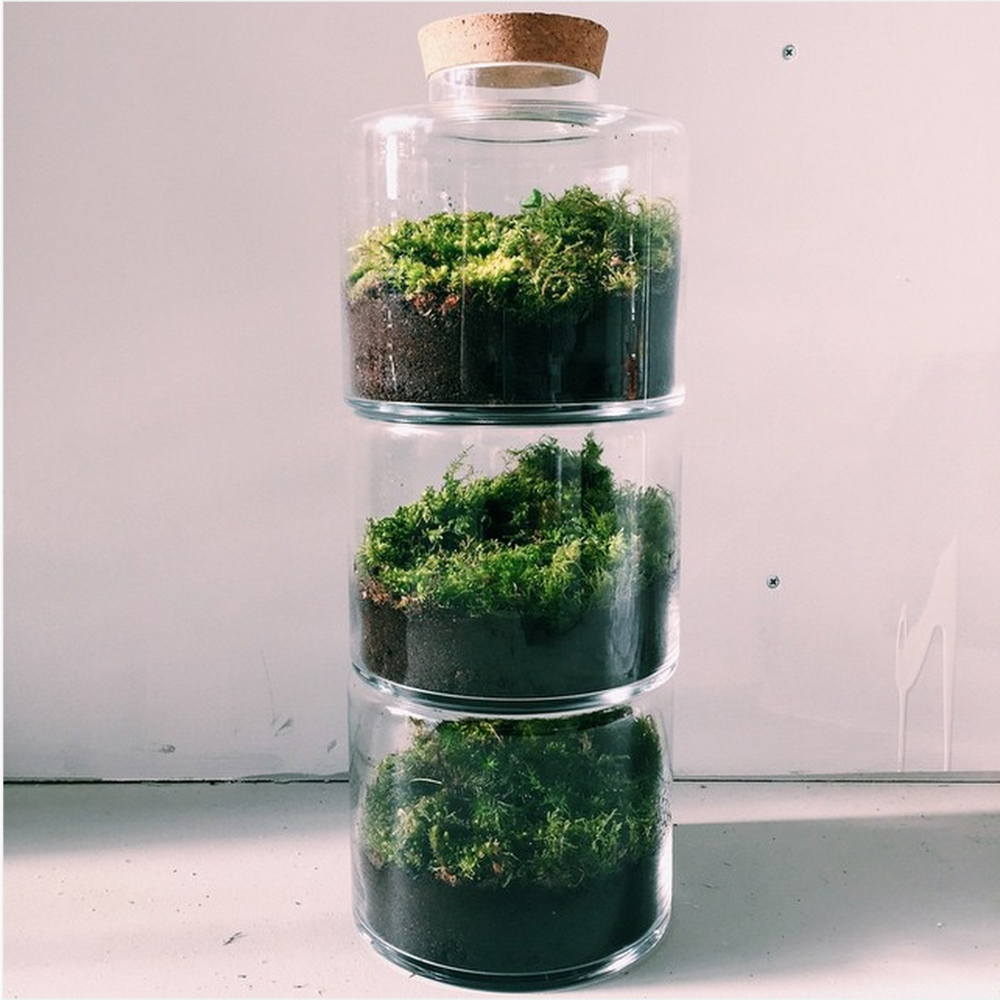 by  London Terrariums