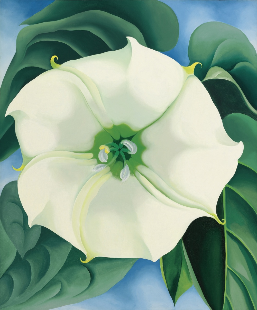 Jimson Weed / White Flower No. 1