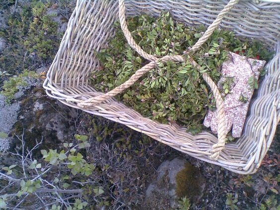 Sóley Organics: Picking the Herbs.