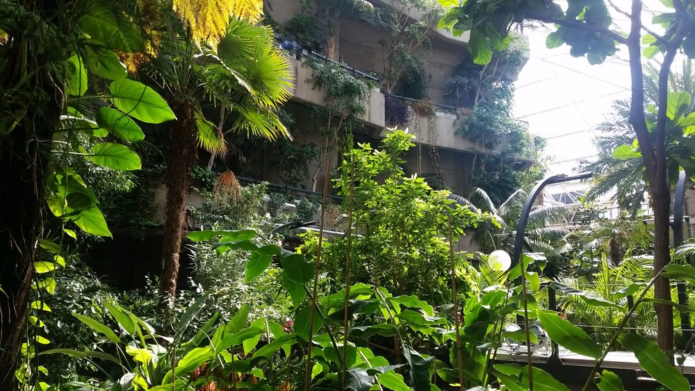 Image: Barbican Conservatory