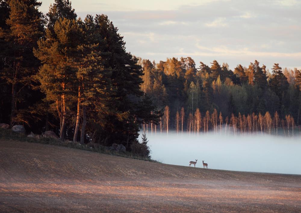 Image Credit: Julia Kivelä