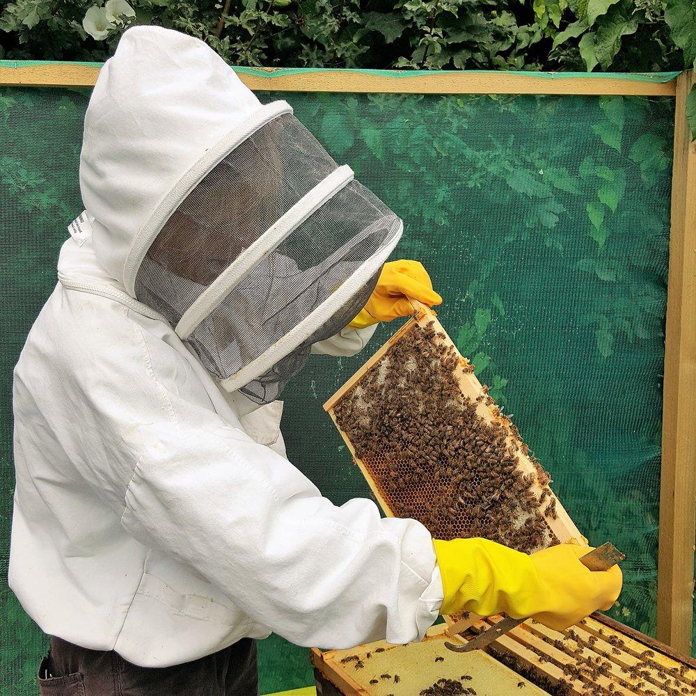 Image: Emily beekeeping