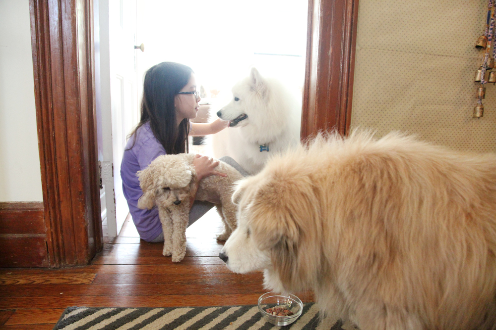 My fave shot! Yuki, Luna & Maddie surrounding the family caregiver.