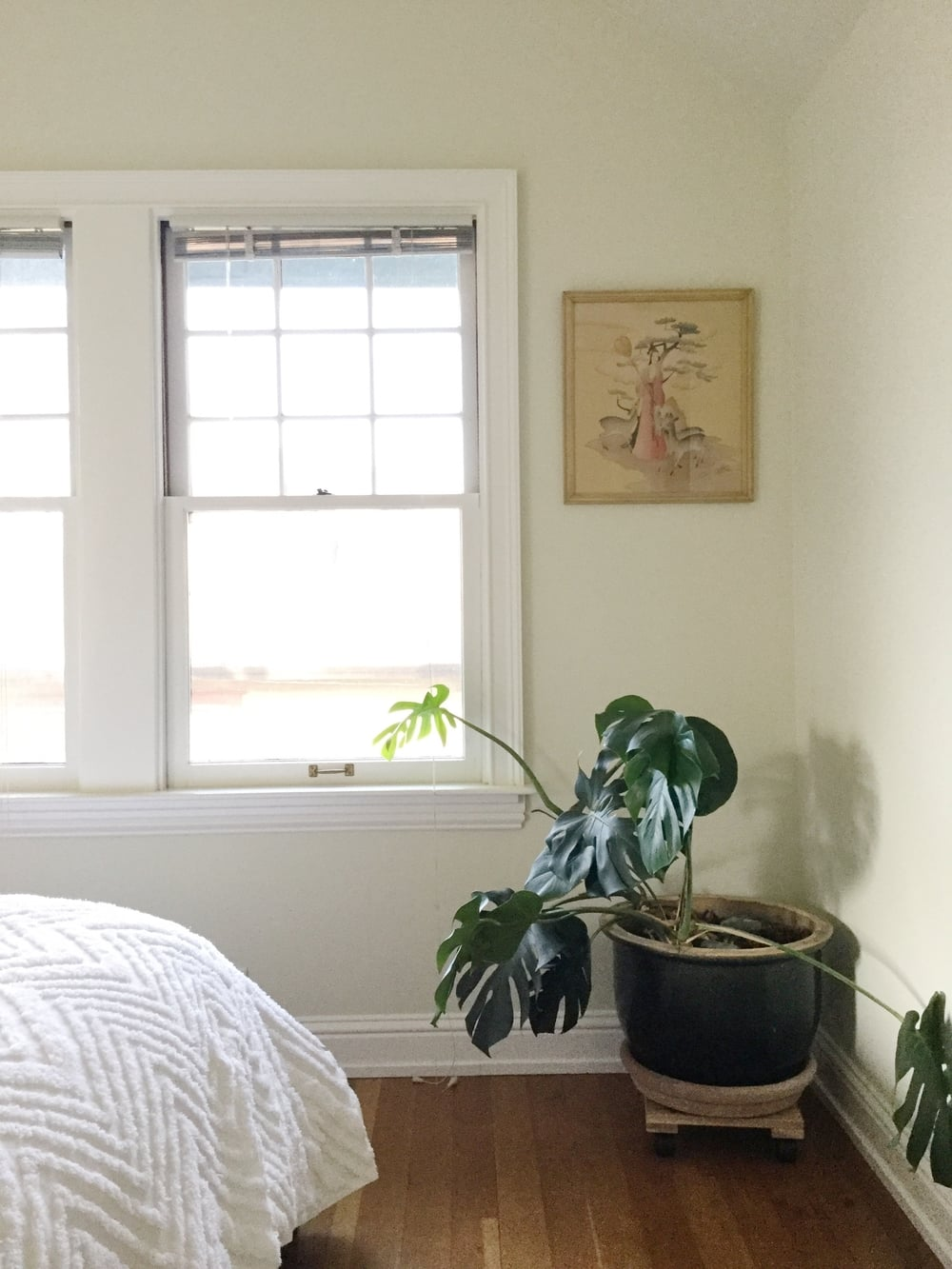 Zen details: a sleepy plant and soft light.
