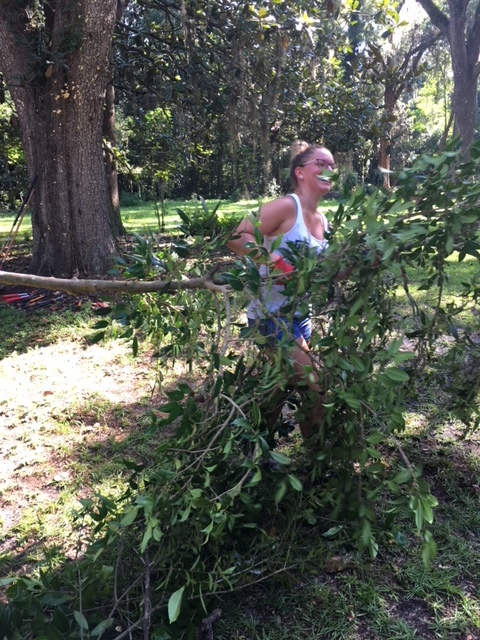 Here is Elisabeth hauling wisteria vines that were choking the camelias.