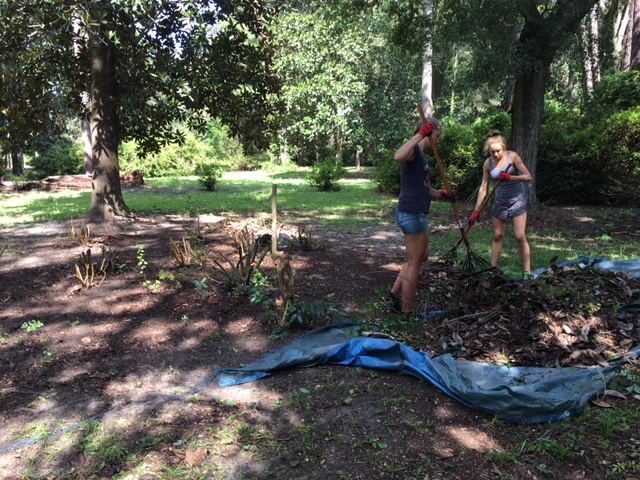 Verena and I are raking the final debris from the first clump.