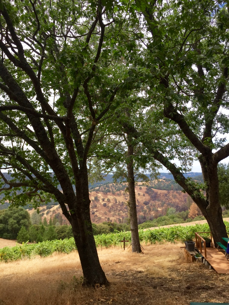 Story Winery in Amador County
