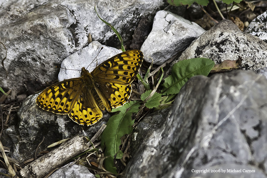 This little butterfly was found in a Wasatch Front canyon