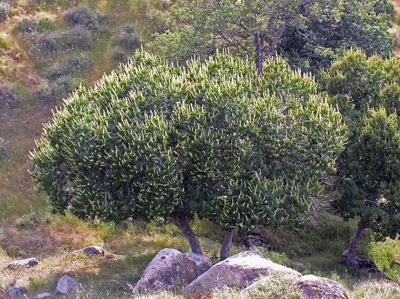 buckeye—$2,000 Wildlands redbud—$1,500 ESA