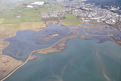 McDaniel Slough post-breach on December 1, 2013 showing tidal action. Photo by Dave Kenworthy.