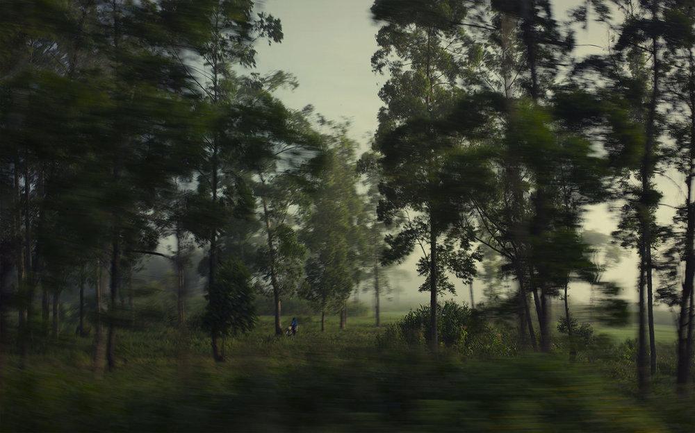 L1014107_trees.jpg