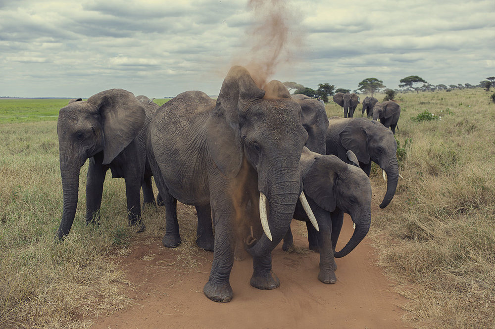 L1014427_elephants.jpg