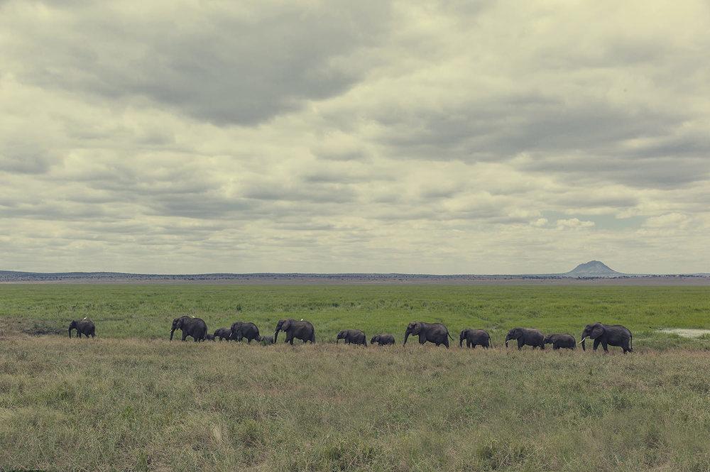 L1014463_elephants_line.jpg