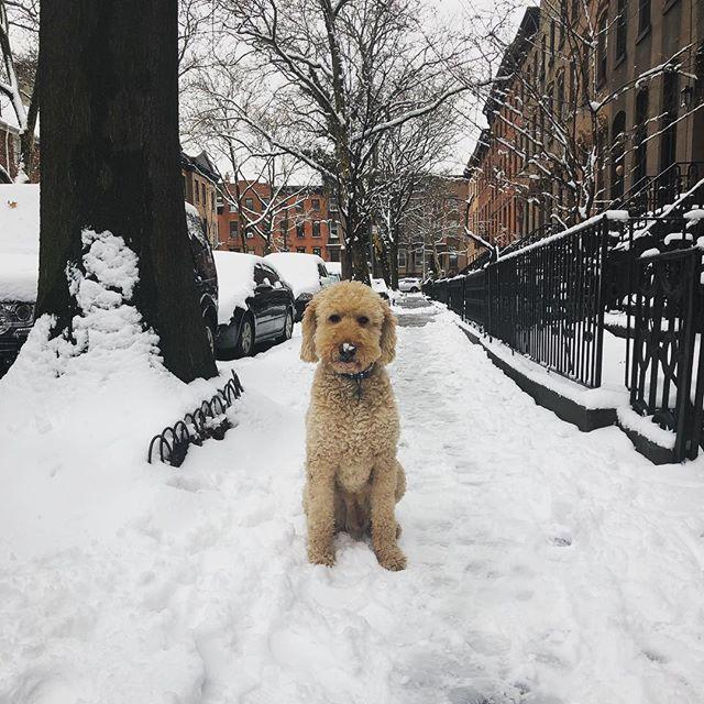 Happy Snow Day ☃️