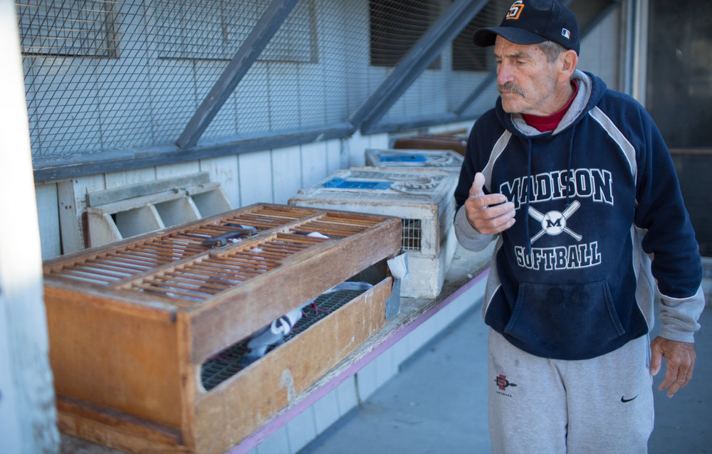Steve Miner looks over his pigeons at his home loft in Bonita, CA. Mr. Miner is a national champion in pigeon racing and his birds consistently post some of the best race times in the United States.