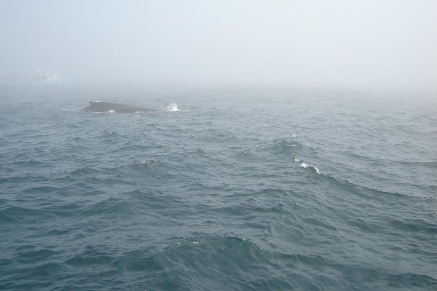Whale Watching Trip - Brier Island