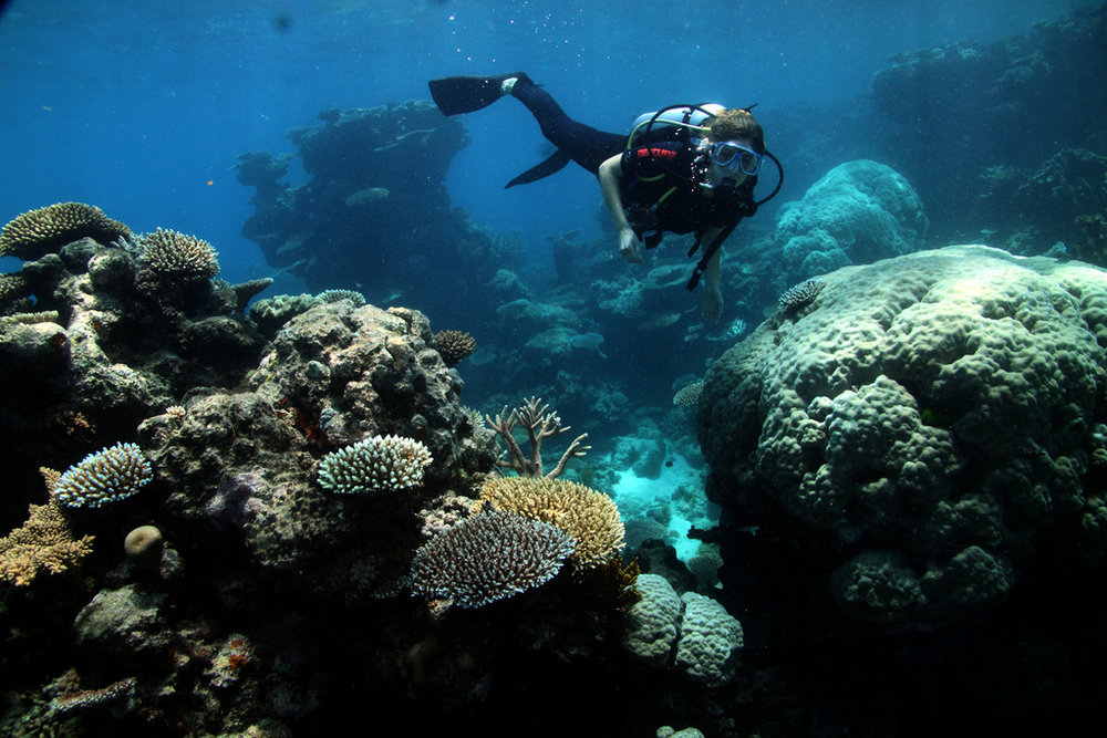 The Reef is one of our greatest economic assets, but a changing climate puts it at risk. Boris Bialek/Flickr (CC BY-NC-ND 2.0)