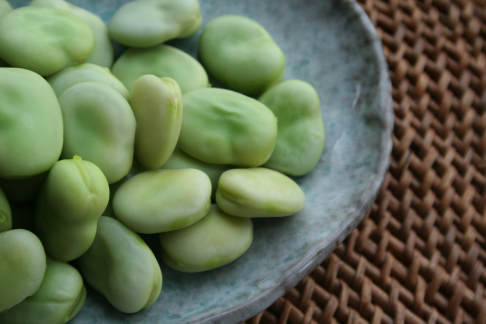 Fava beans, shelled and lightly cooked.   Richard W.M. Jones/Wikimedia Commons  (public domain)