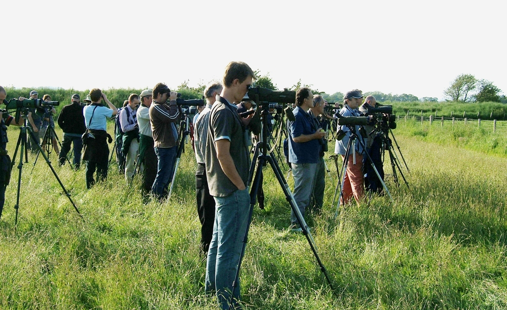 British birders queue up at Caerlaverock, Scotland to tick off the rare white-tailed lapwing. MPF/Wikimedia Commons (CC BY-SA 3.0)