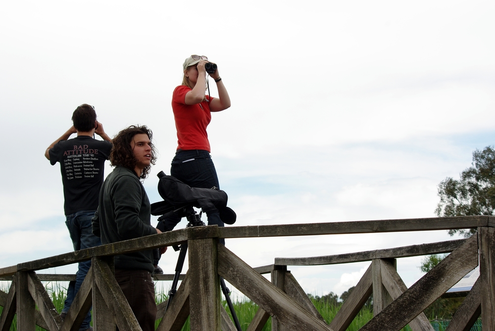 A team of birders scan the skies at Edithvale-Seaford Wetlands during the 2010 Twitchathon. © Rich Akers (used with permission)