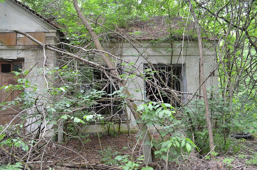 Abandoned buildings in the Chernobyl Exclusion Zone, such as these, as captured in 2013, have been overtaken by nature. Antanana/Wikimedia Commons (CC BY-SA 3.0)