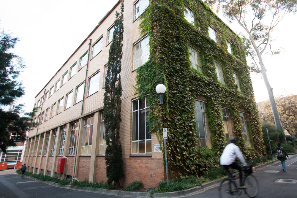 Former ugly blank wall improved with a vibrant green façade of Boston Ivy (Parthenocissus tricuspidata). University of Melbourne. © Julianna Rozek/@plantsgo_up