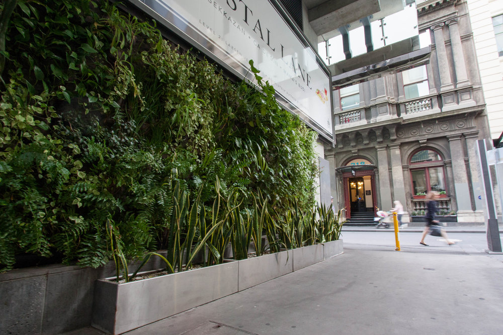 Living wall by Fytogreen brightens a cold corner of the city. Postal Lane, Melbourne.  © Julianna Rozek/@plantsgo_up