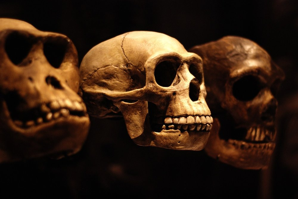 The human body still has a few skeletons in the evolutionary closet.   Lucy Bridges/Flickr  (CC BY-NC-SA 2.0)