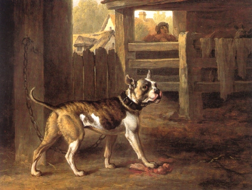 The bulldog, depicted in a 1790 painting by Philip Reinagle. Notice the long tail and the leaner body.   Philip Reinagle/Wikimedia Commons  (public domain)