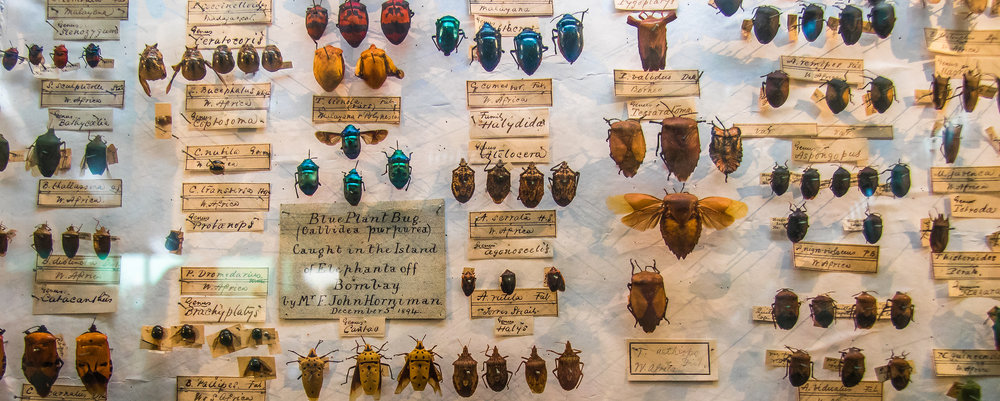 Insect collecting was an especially popular educational hobby during the Victorian era.   Andrew Moore/Flickr  (CC BY-SA 2.0)