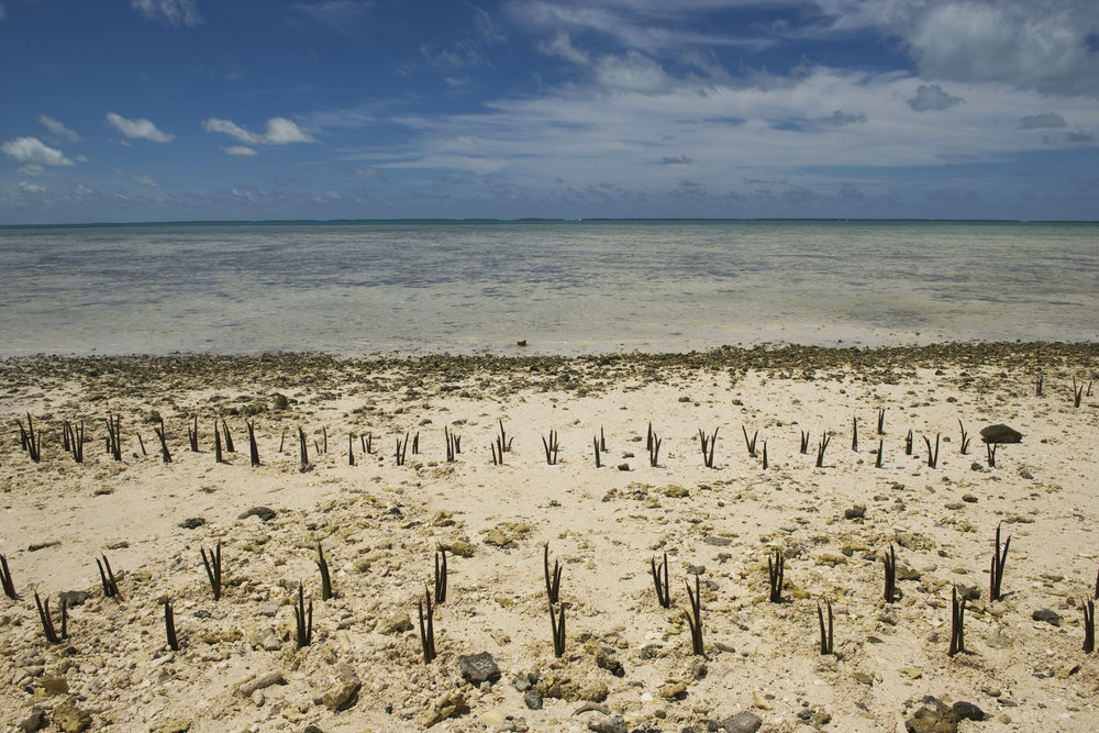 Working with climate-affected communities helps create solutions to meet their unique needs. For example, mangroves were planted in Kiribati to help protect the coast from the effects of climate change. United Nations Photo/Flickr (CC BY-NC-ND 2.0)