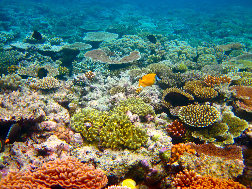 Despite the widespread devastation, there's still plenty to study on the Great Barrier Reef.   Kyle Taylor/Flickr  (CC BY 2.0)