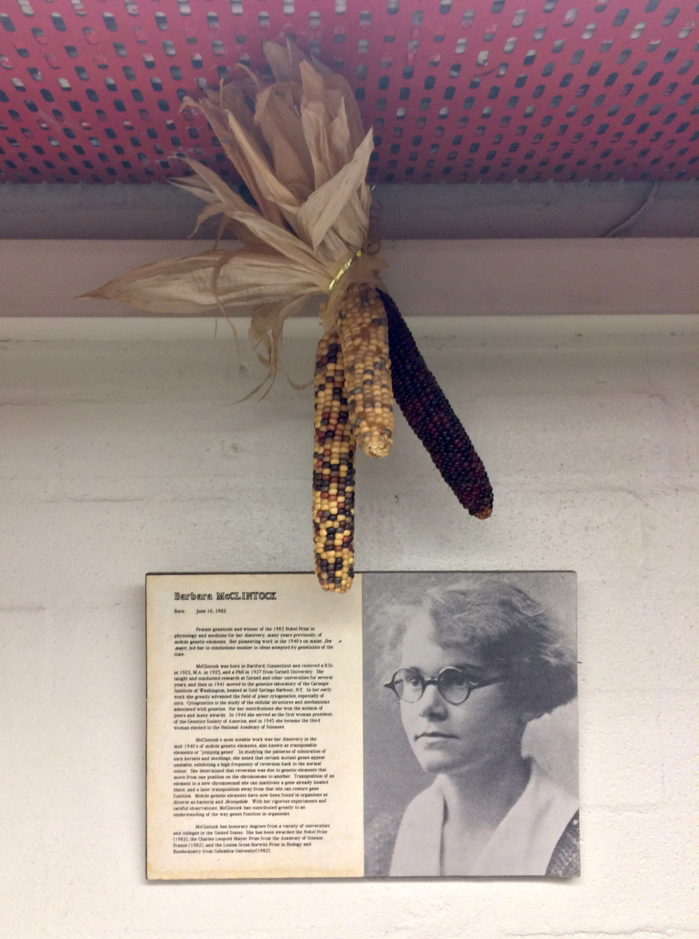 The secular shrine to Barbara McClintock hanging in my lab at The University of Melbourne © Jack Scanlan (used with permission)