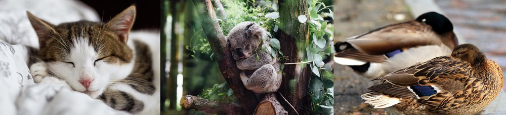 Sleeping is widespread across the animal kingdom.   Alexandru Zdrobău/Unsplash  (CC0 1.0);  Jordan Whitt/Unsplash  (CC0 1.0);  Mr.TinDC/Flickr  (CC BY-ND 2.0)