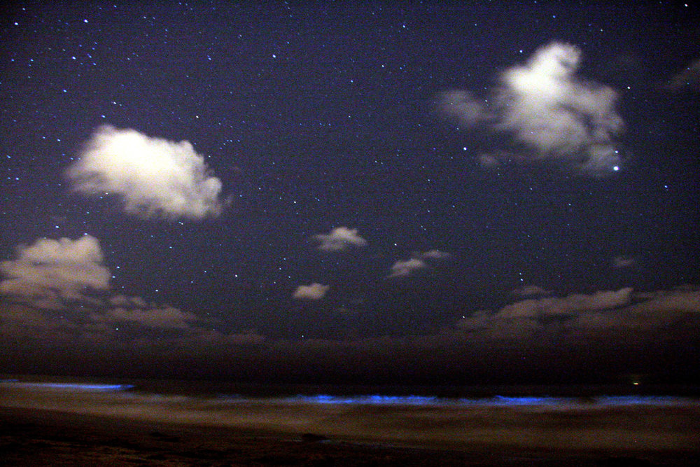 Dinoflagellates glow blue in the surf beneath a night sky. Mike/Wikimedia Commons (CC BY-SA 2.0)