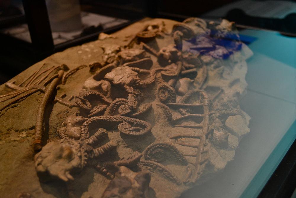 Display in the Deep Oceans Exhibit at the Australia Museum. kawaiikiri/Flickr (CC BY-SA 2.0)