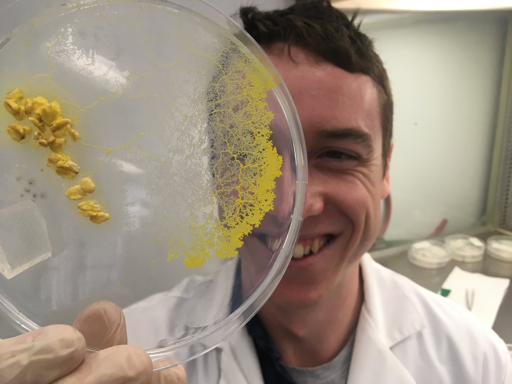 Jules Smith-Ferguson, a PhD candidate at the University of Sydney, is finding that slime moulds are smarter than we might expect.  © Jules Smith-Ferguson
