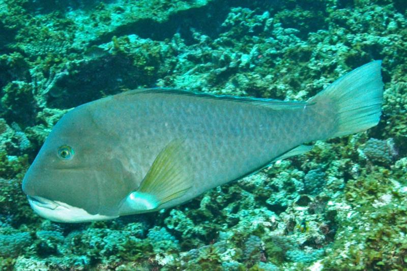 Graham Edgar/Reef Life Survey    (CC BY)