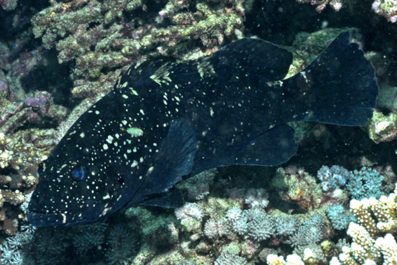Rick Stuart-Smith/Reef Life Survey    (CC BY)