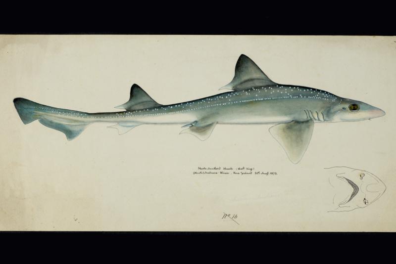 Frank E. Clarke, 1875/Te Papa, Museum of New Zealand    (public domain)