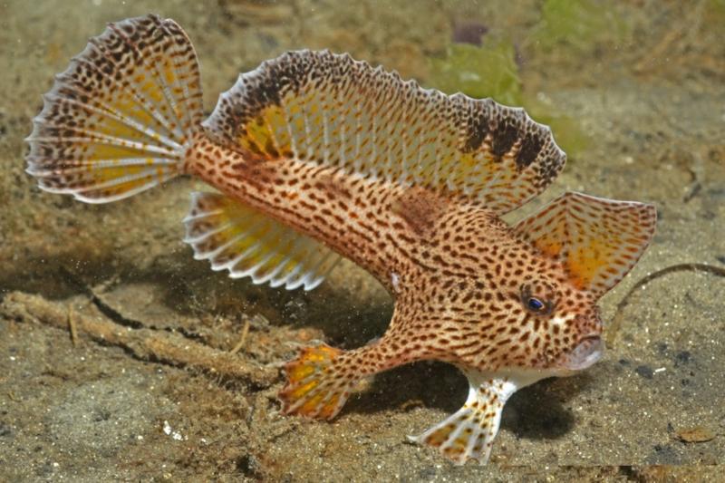 Rick Stuart-Smith, Reef Life Survey/Wikimedia Commons    (CC BY 3.0)