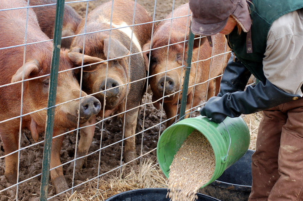 In many jurisdictions, animal welfare laws have specific exceptions for farming and scientific use.   Dana McMahan/Flickr  (CC BY-NC 2.0)
