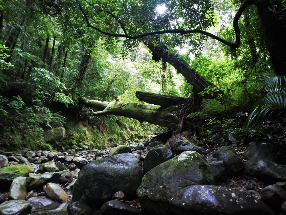The island's pristine habitat relies on regular weed surveys. © Eli Sooker