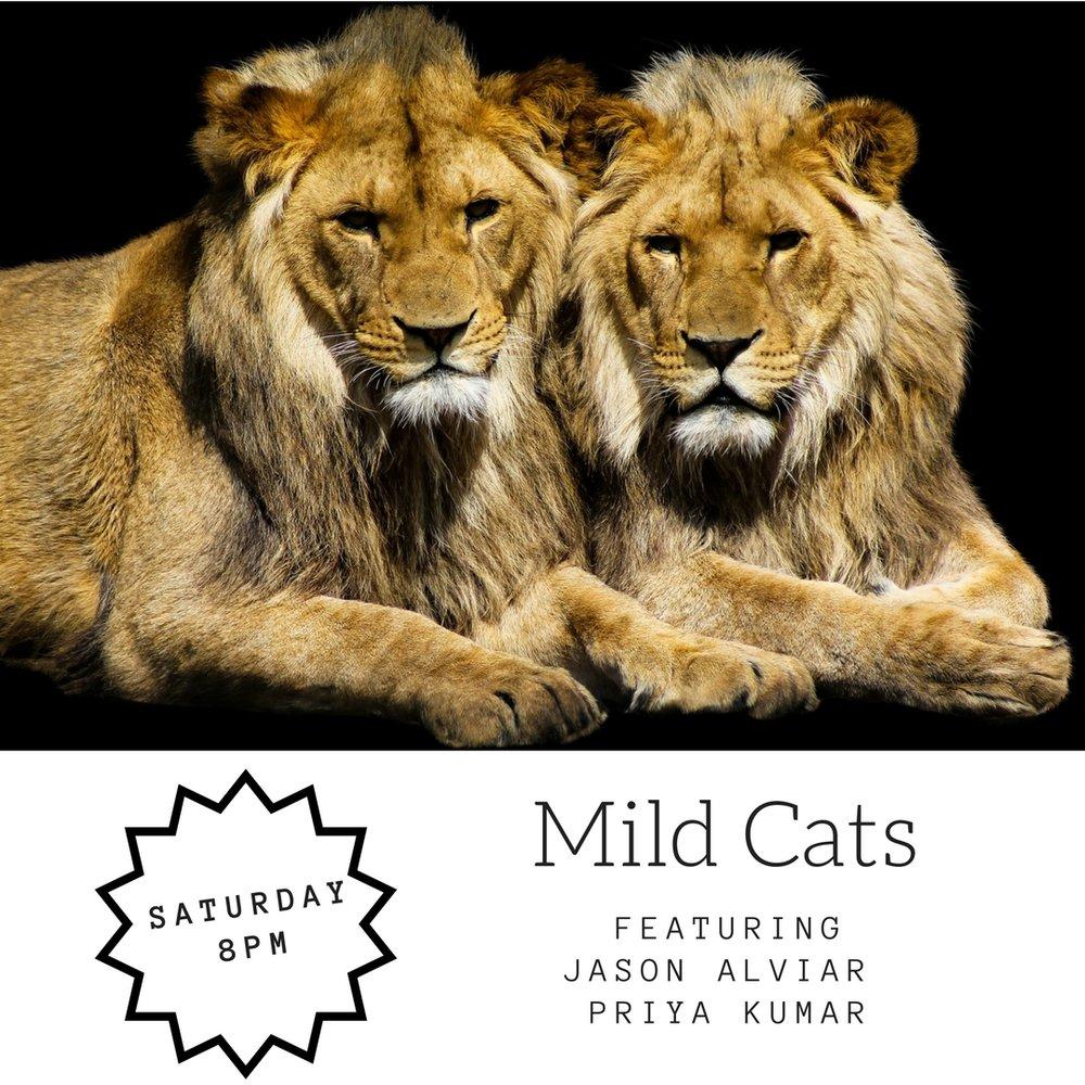 Mild Cats (1).jpg