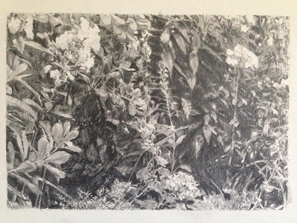 garden drawing.jpg