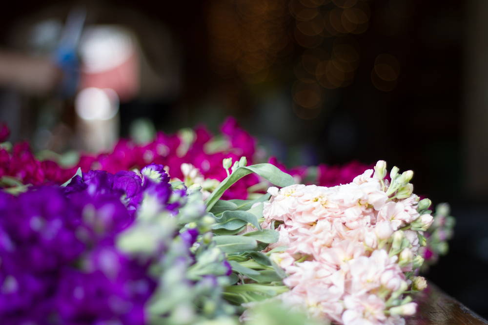 Fresh flowers at Bliss Farm in Granville, Massachusetts. Sweet Alice Photography.