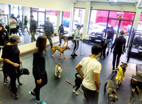 Socialization Classes - To be eligible for Socialization Classes, you must have completed a training service with us prior. The classes will last one hour and will include the dog, owner and two DCTK9 staff members.Socialization Single Class: $45Socialization 5 Classes: $200Socialization 10 Classes: $375