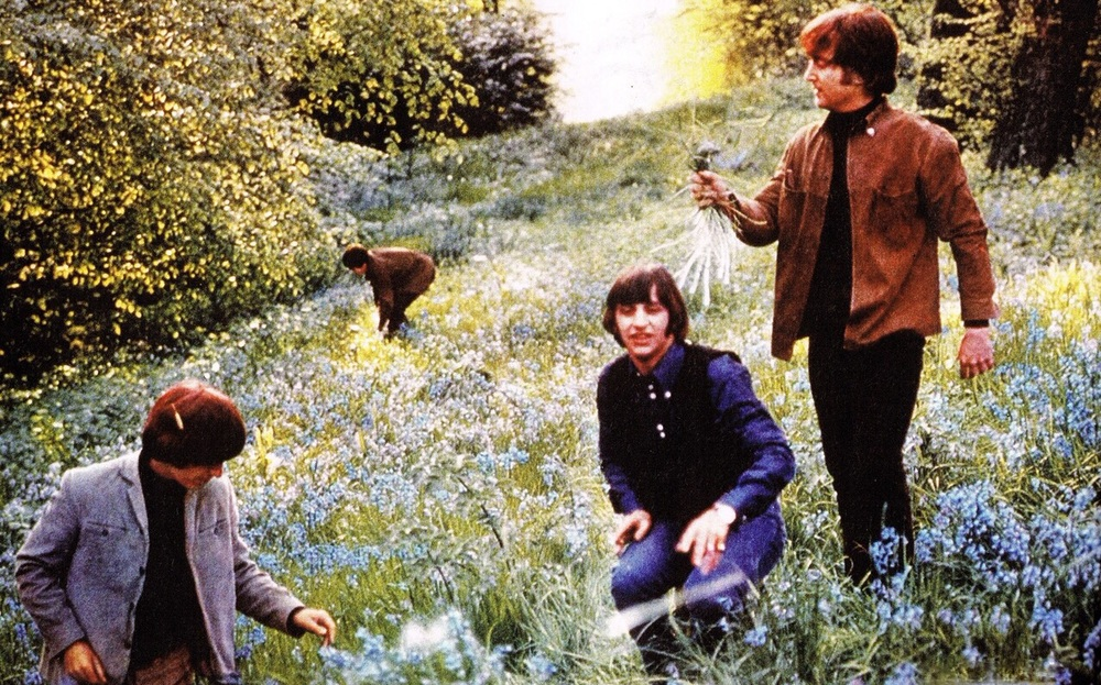 The Beatles picking flowers, circa 1965.